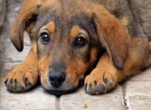 «От его рук погибают беззащитные щенки и котята»: волгодонцы собирают подписи под петицией о живодере