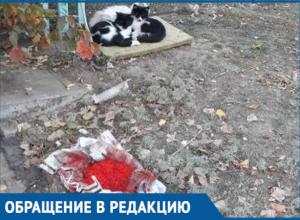Красную икру не едят зажравшиеся уличные коты Волгодонска