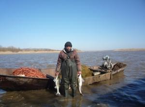 В Цимлянском водохранилище выловили на треть больше рыбы