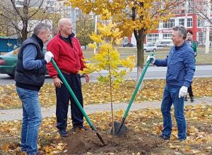 Политическая элита Волгодонска высадила 80 кленов на проспекте Курчатова