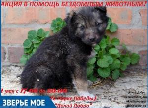 В День весны и труда в Волгодонске пройдет благотворительная акция в помощь бездомным животным