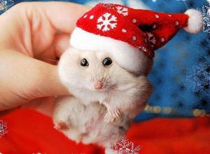 «Живой» подарок на Новый год не оставит равнодушным ни одного ребенка