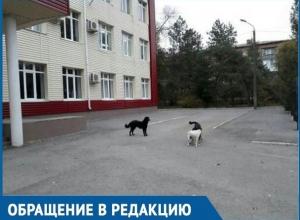 Детям приходится убегать от бездомных собак, - обеспокоенная мама из Волгодонска