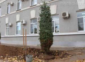 Все оставшиеся деревья возле администрации Волгодонска спилят и посадят новую липовую аллею
