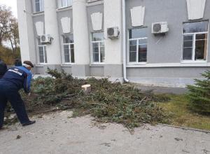 Трехметровые голубые ели из Адыгеи высадят вместо срубленных деревьев у администрации Волгодонска