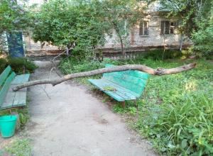 Старое дерево рухнуло на играющих детей в Волгодонске