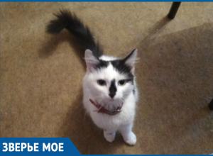 Голодную домашнюю кошку нашли на необитаемом острове недалеко от Волгодонска
