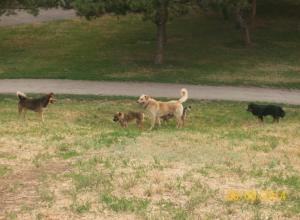 Власти Волгодонска признались, что не готовы тратить деньги на проблему бродячих собак