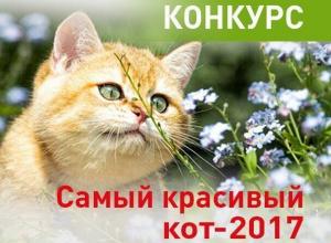 Внимание! Голосование в конкурсе «Самый красивый кот-2017» стартует 16 апреля