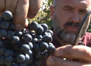 Возрождение казачьего виноделия - кто им занимается? - выяснил Олег Пахолков