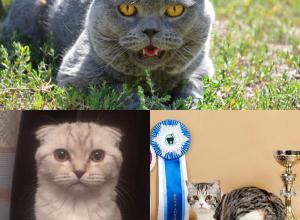 Кокос, Боня и Габиша стали победителями конкурса «Самый красивый кот - 2017»