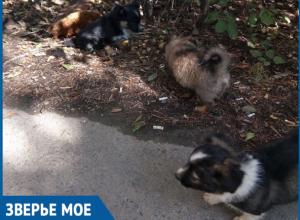 Брошенным на проезжей части щенкам ищут дом или передержку