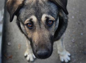 За жестокое убийство и расчленение бездомной собаки на мужчину завели уголовное дело в Волгодонске