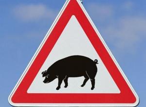 В сорока километрах от Волгодонска ввели режим ЧС из-за Африканской чумы свиней