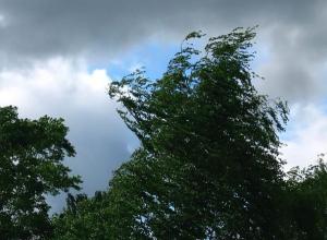 +20 и порывы ветра до 19 м/с будут сопровождать субботний день в Волгодонске
