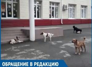 Бездомных собак стало еще больше, - возмущенная бездействием властей и окружающих волгодончанка