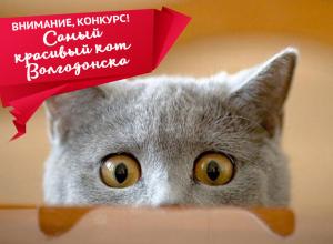 28 марта - последний день приема заявок на участие в конкурсе «Самый красивый кот Волгодонска»