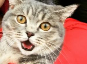 Коты Волгодонска в шоке от жары