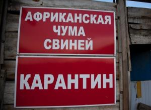 В Волгодонском районе ввели карантин по африканской чуме свиней