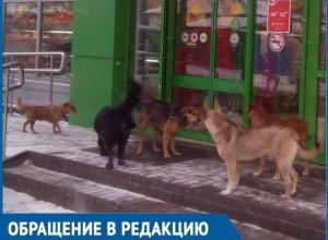 Лакомящаяся костями стая диких собак заблокировала выход из «Пятёрочки» в Волгодонске