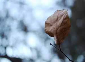 Плюсовая температура и дождь ожидают волгодонцев в понедельник 18 декабря