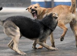 «Живое оружие на улицах города»: Бездомные собаки пугают жителей Волгодонска