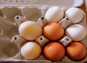 Более 300 грубо нарушающих ветеринарное законодательство яиц конфисковали в гимназии «Шанс»