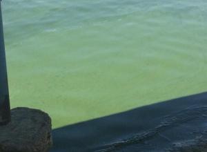 После купания в Цимлянском водохранилище у волгодонца «позеленели» ноги