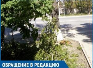 Дерево размером с автомобиль упало возле пешеходного перехода в Волгодонске