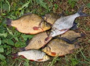 Волгодонским рыбакам решили запретить ловить более 5 килограммов рыбы
