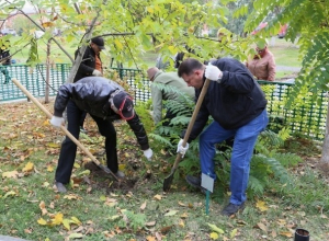 В Волгодонске в День древонасаждения посадят более 2000 деревьев и кустарников