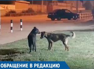 Жителей Волгодонска встревожило странное поведение бродячего пса