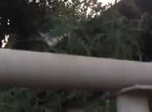 «Замечательный сосед»: у жителей частного сектора обнаружили полянку конопли