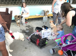 В День Молодежи прошла выставка бездомных животных