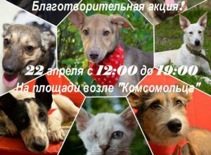 Зоозащитники заявили о подготовке масштабной шоу-акции в Волгодонске