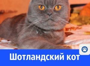 Брутальный кот ищет кошечку для продолжения рода