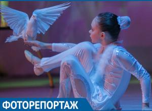 В Волгодонске прошла памятная дата «День белых журавлей»