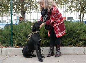 Волонтерам удалось собрать внушительную сумму для бездомных животных и найти новый дом для двух собак во время акции в Волгодонске