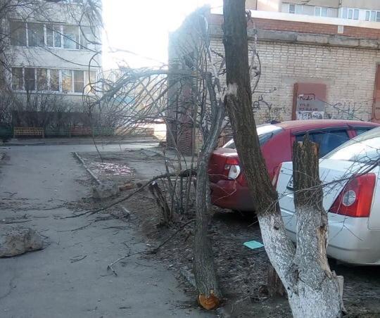 Дерево упало на припаркованные машины на проспекте Строителей