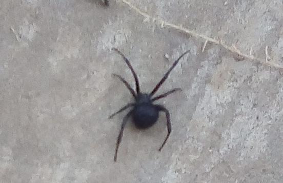 Смертельно-опасного паука нашла женщина во дворе дома в Волгодонске