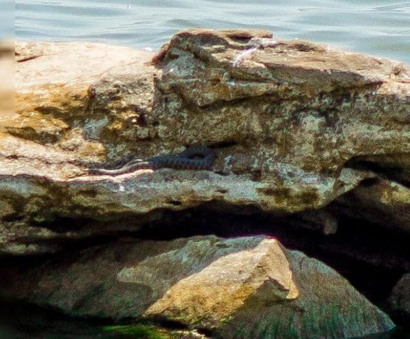 Гадюки могут подпортить фотосессии на берегу Цимлянского водохранилища