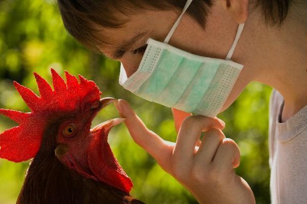 Опасную для людей болезнь обнаружили у птиц недалеко от Волгодонска