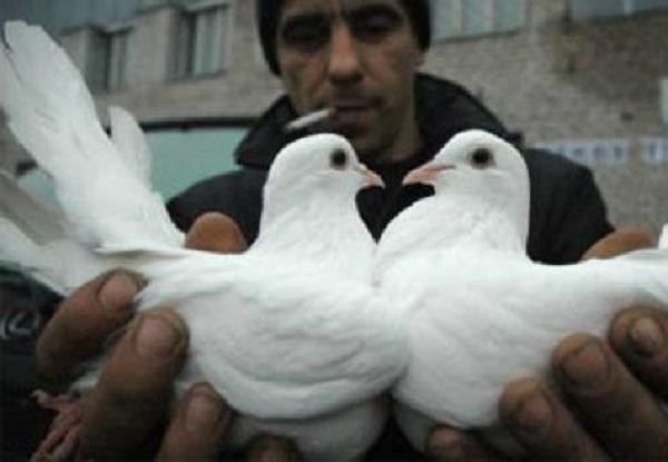 Морозовчанин жестоко убил 26 домашних  голубей