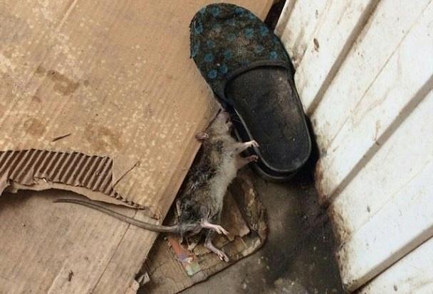 «Вот так мы встречаем приезжих»: волгодонцев напугала мертвая крыса на вокзале