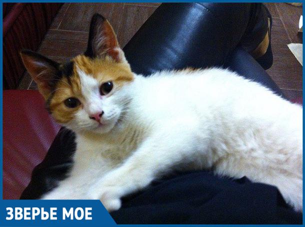 Новых хозяев питомца ждал небольшой сюрприз, - волонтеры рассказали о спасенном котенке