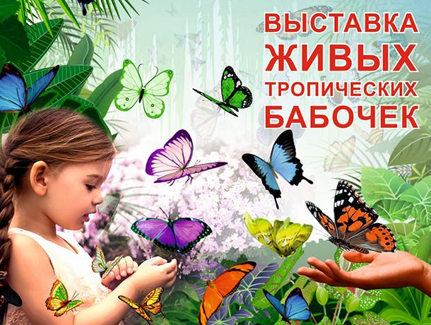 Милые звери и красивые бабочки создадут новогоднее настроение волгодонцам