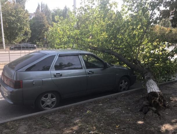 Вырванное с корнем дерево упало на припаркованный на проспекте Строителей ВАЗ-2112
