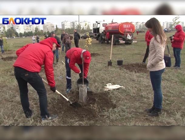 Как сажали деревья в волгодонском парке «Молодежный»
