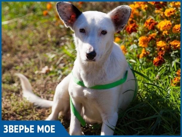 Хозяева бросили беременную собаку, оставив ей ржавое ведро с водой и коробку