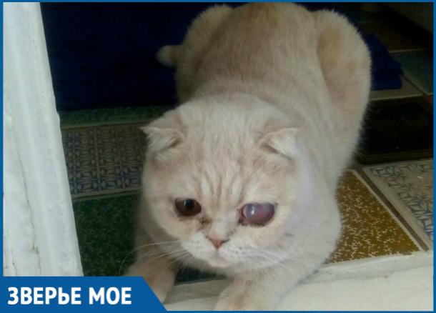 Голодную кошку на протяжении долгого времени держали в грязной клетке